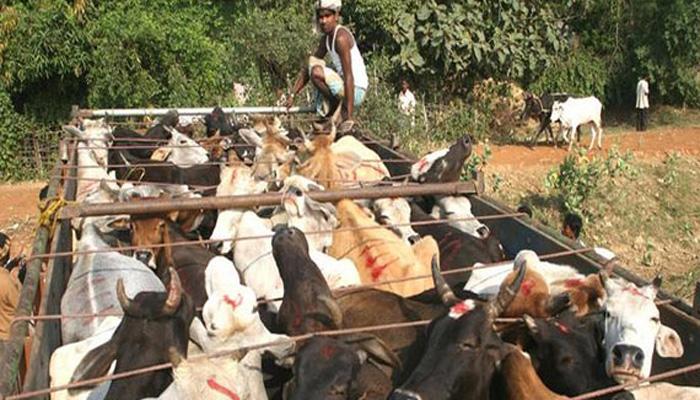 Mob set ablaze truck near Jammu on suspicion of cattle smuggling